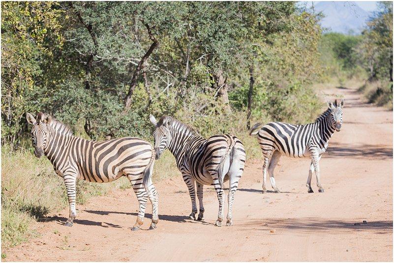 Lizel & Guy se troue soos op www.mooitroues.co.za_0035