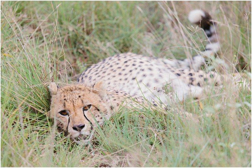 Lizel & Guy se troue soos op www.mooitroues.co.za_0039