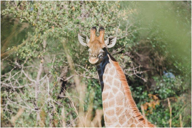 Lizel & Guy se troue soos op www.mooitroues.co.za_0049